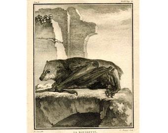 1777 ANTIQUE BAT ENGRAVING original antique bats print - la roussette X - halloween decor