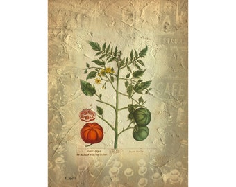 Home Décor Wall Art ~ Vintage photo medley ~ Quality giclee print of photography art a botanical tomato