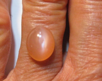 Premium* Peach Cat's Eye  Moonstone  cab ...       11 x 9 x 5  mm  ....        B2860