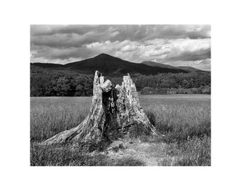 "Fine Art Black & White Landscape Photography of Smoky Mountains - ""Stump in a Field 1"" (Cades Cove)"