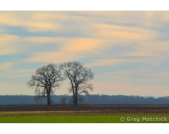 Fine Art Color Landscape Photography of Morning Sky and Two Trees in a Field at Columbia Bottom