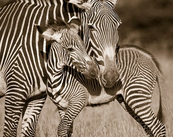 BABY ZEBRA and MOM Photo, Vintage Sepia Print, Mom and Baby Animal Photograph, African Wildlife Photography, Safari Nursery Art, Baby Shower