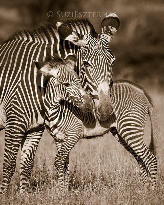 Baby Zebra And Mom Photo Vintage Sepia Print Mom And Baby
