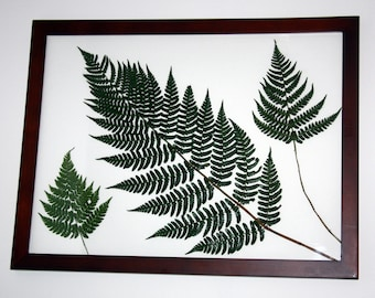 15% off!  Pressed Fern Picture- 12x16 Cherry Wood Frame