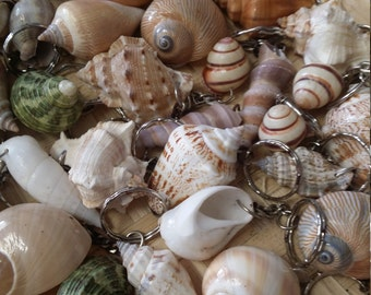 Set of 5 Shell Keychains- Perfect Party Favors, Beach Weddings, Gifts, Stocking Stuffers, Condo Rental Keys, Backpack Charms, FREE SHIPPING
