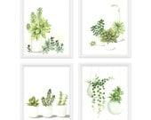 RESERVED - Succulent Watercolor Print Set of 4, 5x7 Succulent Prints