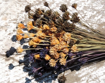 Dried Flowers Brazilian Hill Flower Bouquets Natural and Hand Dyed Supply Florists Floral Supplies Dark Brown Blue Natural