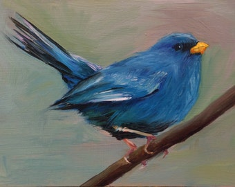 Blue Finch - Original oil painting - 5 x 7 inches