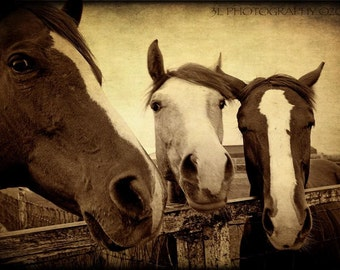 Horse Photography Western Art Rustic Southwestern Home Decor Texas Art Prints