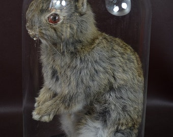 taxidermy of 2 head freak  rabbit made by 2 rabbit, mounted in glass dome 1#