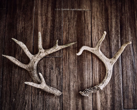Lodge Decor Antler Print Or Canvas Art Rustic Wall Art