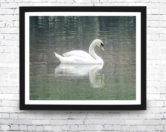 Swan Art Print, Swan, Coastal, Beach House Decor, Swan Print, Swan Wall Art, Summer Decor, Swan Photo, Animal Photography, White Swan Print