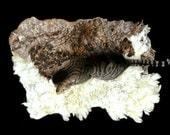 Cat Bed - Pet Bed - Dog Bed - Cruelty Free Felted Wool Fleece Rug - Dorset/Finn Cross - Supporting US Small Farms - Ready to Ship