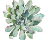 Succulent print of watercolour painting S116 - 5 by 7 size smallest print- botanical art