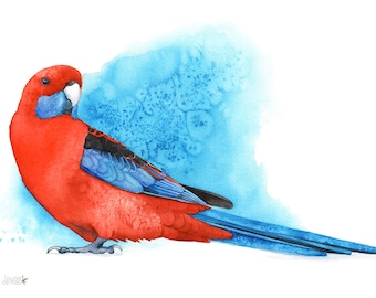 Crimson Rosella print, 5 by 7 size, CR13216, Crimson Rosella watercolour painting, rosella watercolor print, parrot watercolor