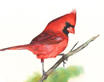 Cardinal print of watercolor painting, cardinal watercolor painting print, christmas wall art, red living room wall art, 5 by 7 size print