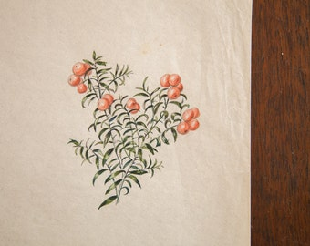 Antique Deathberries Yew Berries in Watercolor, Casual Sketch Series