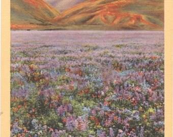 California, Wild Flowers - Linen Postcard - Unused (PP)