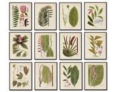 Botanical Print Set No. 15 - Giclee, Canvas Art, Art Print, Tropical Art, Beach Decor, Coastal Art, Botanical Print Set, Posters, Wall Art