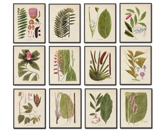 Botanical Print Set No. 15, Giclee, Wall Art, Art Print, Tropical Art, Beach Decor, Coastal Art, Botanical Print Set, Tropical Botanicals