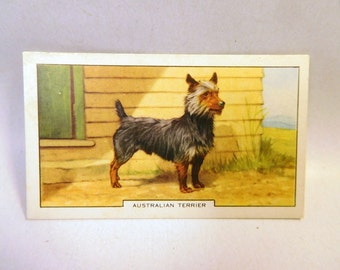 Vintage AUSTRALIAN TERRIER DOG 1938 Gallaher Cigarette Tobacco Card 2nd Series #22