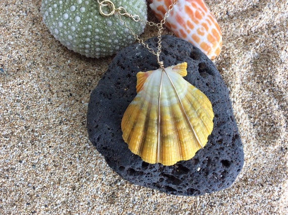 Hawaiian Sunrise Shell,  Fresh Water Keshi Pearl, 14k Gold Filled Cable Chain Necklace