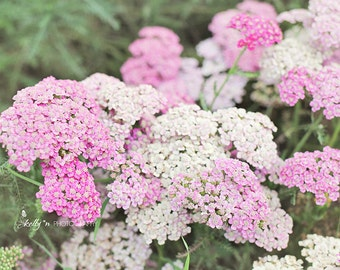 Pink Yarrow Flowers Photo, Flower Photography, Nature Photography, Pink White Floral Art, Floral Wall Art, Garden Photography, Yarrow Print