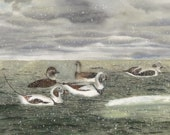 For Lionmycat - Long-tailed Ducks in a Snow Squall Note CArd