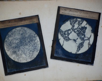 Vintage Glass Slides Bacillus