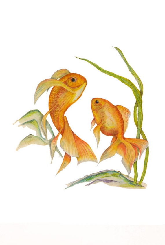 LIMITED EDITION of Gorgeous Golden Swirling Goldfishes, Carassius auratus, Fish Tank Print, Aquatic Life, Golden Goldfish Life, Art Print