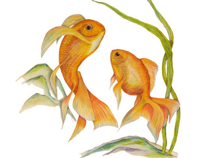 LIMITED EDITION of Gorgeous Golden Swirling Goldfishes, Carassius auratus, Fish Tank Print, Aquatic Life, Golden Goldfish Life, Art Print