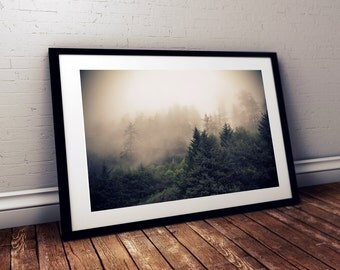 Photograph of trees in fog and mist at Ecola State Park in Oregon, Northwest, landscape, fine art photography