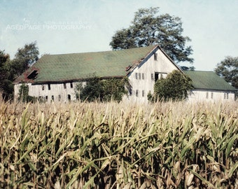 White Barn Photography, Fixer Upper Style Wall Art, Barn Print, Rustic Country Farm House Wall Decor, Photography Art | 'Across The Corn'
