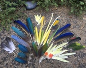Blue, green, yellow, red, grey and white exotic bird's feathers .