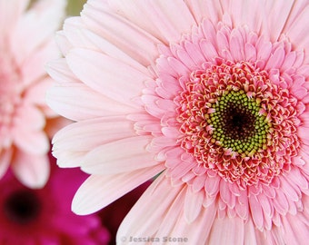 Close-up DAISY PHOTO, Fine Art Print For A Good Cause, by Jessica Stone - 8x10