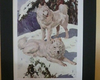 SAMOYEDS Dog Vintage Mounted 1947 Stuart Tresilian dog plate print Unique Christmas Birthday Thanksgiving dog lover gift White snow dogs