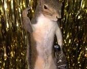 Taxidermy Jack Daniels Squirrel FTW Whiskey Drinkers Hell Raisers