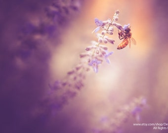 Honeybee Clinging  Lavender Flower -Canvas Gallery Wrap -Nature Botanic -Dreamy Sunshine  Purple Bokeh -Spring & Summer -Home Decor Wall Art