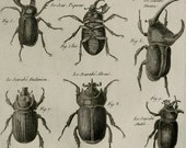 1789 Antique print of RHINOCEROS BEETLES, different species.  Coleoptera. Entomology. Panckoucke Encyclopédie Engraving. 227 years old