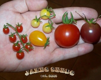 Sale - Jakes Cherry Mix Bag of Tomato Seeds