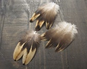 8 Small Rooster Wing Feathers ~ Cruelty Free **Use Coupon Code FEATHERS20 and save 20% on all Feathers**