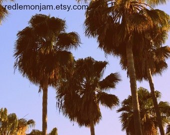 Palm Tree Photographic Art - DIGITAL DOWNLOAD - Retro Style Palm Trees Venice Beach California - Photographic JPG art