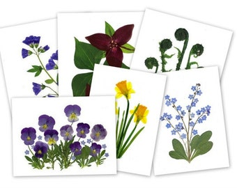 Spring Flowers, Pressed Flower Notecards, Set of 6 assorted cards,  - #048