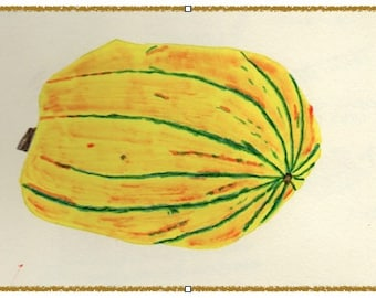 NEW! DELICATA SQUASH note card. Colorful and hand drawn