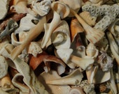 Reserved for Mariyah  100 Pc Beach Odds & Ends -Mixed Media - Shell Spirals Coral  Fragments , Barnacles