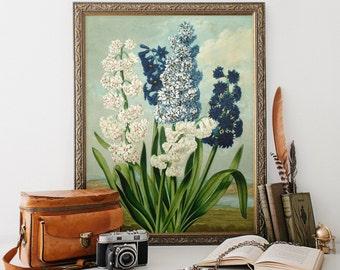 Vintage Botanical Print, Blue and White Hyacinths, Flower Print, Home Decor, Antique Natural History, Floral Art Print Reproduction FP02