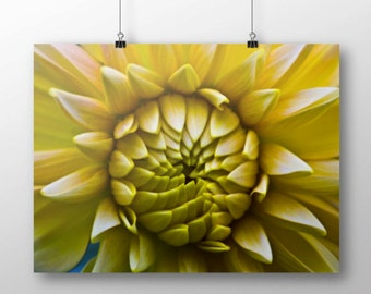 Yellow Macro Flower Photography wall art 6x4 fine art photography 8x12