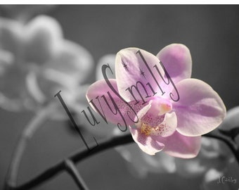 Watercolor Orchid Photograph