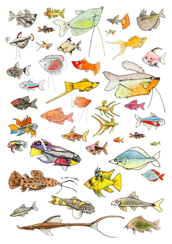Good community fish poster a3 sized for Good community fish