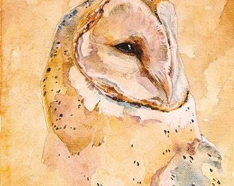 Barn Owl Original Painting